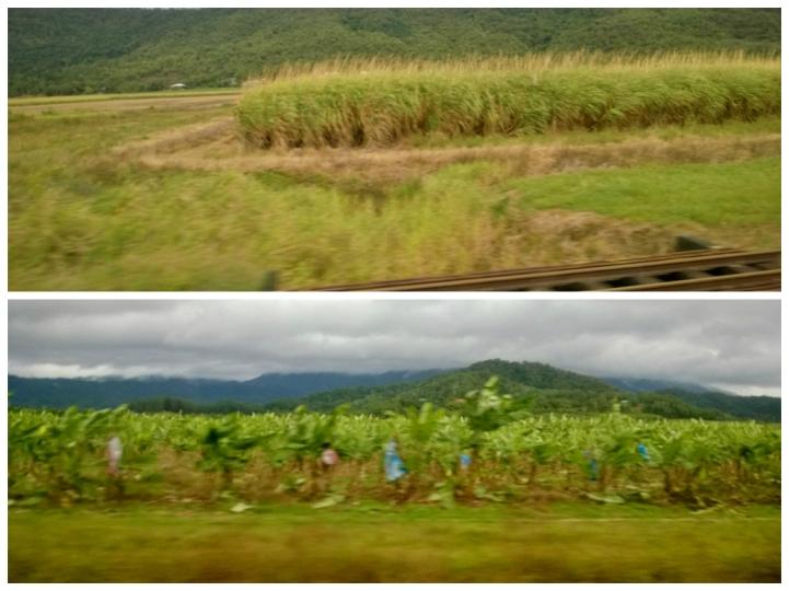 Top: sugar cane Bottom: bananas